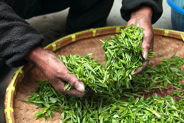 tea-farmhouse-hand-fresh-39347.jpeg